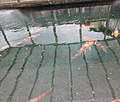 Spring of Carp, Tochigi city.jpg
