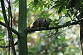 Squirrel at Damsen Park.JPG