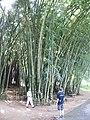 Sri Lanka Photo113.jpg