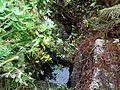 St Conan's Holy Well, Dalmally, Argyll & Bute.jpg