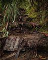 Stairs back up - panoramio.jpg