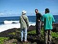 Starr-091104-0732-Sesuvium portulacastrum-habit view ocean with Forest Kamaui and Mike-Kahanu Gardens NTBG Kaeleku Hana-Maui (24961184066).jpg