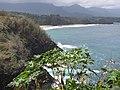 Starr-130318-2613-Ricinus communis-habit view coast-Kilauea Pt NWR-Kauai (25181404706).jpg