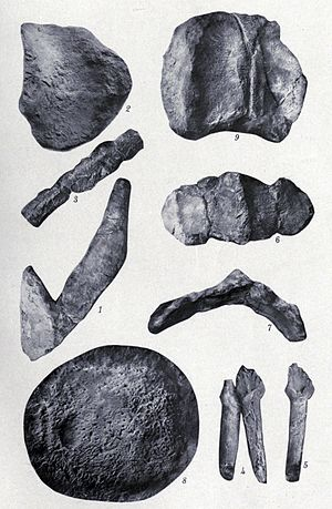 Stegopelta - Armor plates and teeth