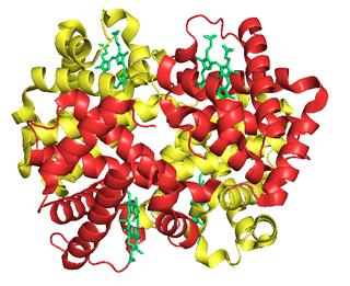 Fetal hemoglobin protein complex