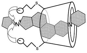 Schematic diagram of sugammadex encapsulating a rocuronium molecule