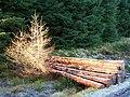 Sunlit logs - geograph.org.uk - 294727.jpg