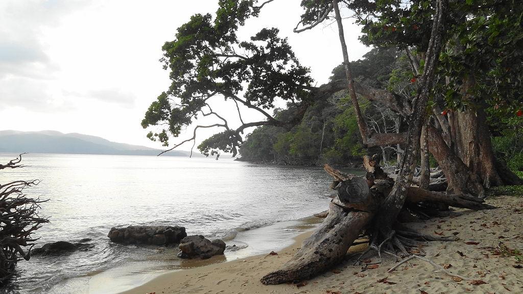Offbeat India Tour Ideas - rainforests at Andaman Islands