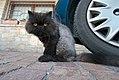 Sylvester the cat (621880525).jpg