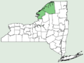 Symphyotrichum ontarionis var ontarionis NY-dist-map.png