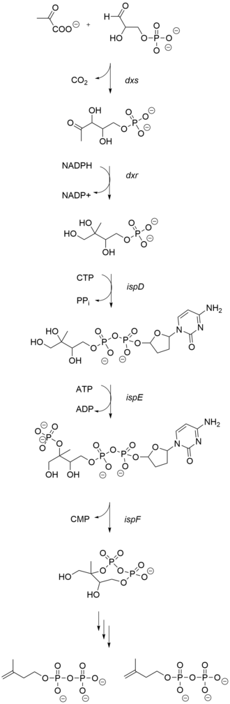 Salvinorin A - Synthesis of IPP and DMAPP via 1-deoxy-d-xylulose-5-phosphate Pathway