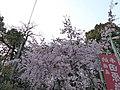 Tahara(^) inari shrine , 田原稲荷神社 - panoramio (5).jpg