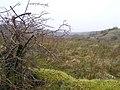 Tawnymakelly Townland - geograph.org.uk - 1089575.jpg