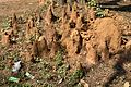 Termite Mound - Indian Institute of Technology Campus - Kharagpur - West Midnapore 2013-01-26 3676.JPG