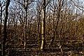 Texel - De Dennen - Nature Path 'Alloo' - View NW I.jpg