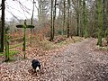 The Bridleway was once much wider - geograph.org.uk - 1201322.jpg