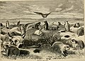 The Pacific tourist (1876) (14780744163).jpg