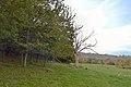 The Pickering Plantation, Norbury Park, Surrey.jpg