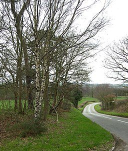 The Road to Highgate Common - geograph.org.uk - 366848
