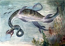 Old paleoart of two elasmosaurs with inaccurately curled necks. One is in the foreground with a fish in its mouth and the another chasing fish in background.