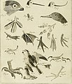 The animal kingdom, or zoological system, of the celebrated Sir Charles Linnæus. containing a complete systematic description, arrangement, and nomenclature, of all the known species and varieties of (14564209627).jpg