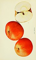 The apples of New York (1905) (19559844409).jpg