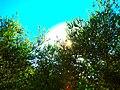 Thru The Bushes - panoramio.jpg