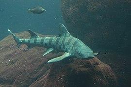 Tiburón (50129230923).jpg