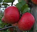 Topaz Apfel.jpg