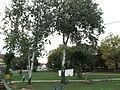 Town park, Svilajnac 1.JPG