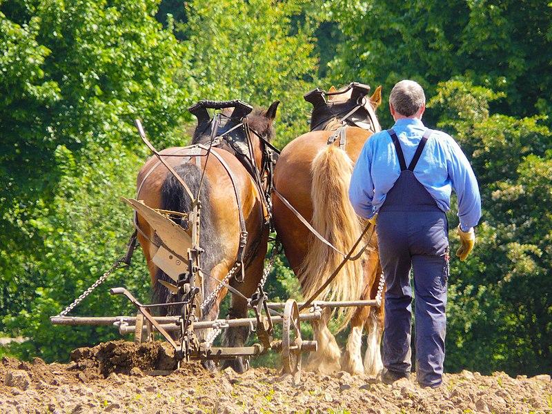 File:Traditioneller Pferdepflug.jpg