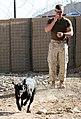 Training bomb sniffing dogs (4400683267).jpg