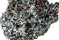 Trapeliopsis granulosa-4.jpg