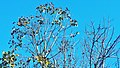 Tree 2018 13.jpg