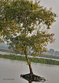 Tree I IMG 1671.jpg
