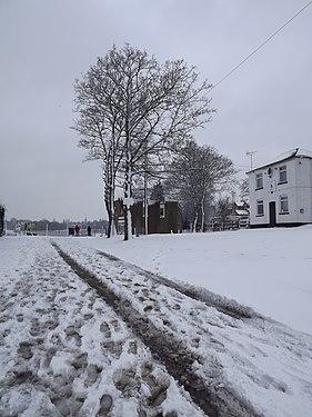 Tree in winter 08.JPG