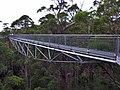 Tree top walk - Valley Of The Giants - Walpole-Nornalup National Park.jpg