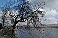Trees - geograph.org.uk - 365389.jpg