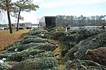 Trees for Troops spreads Christmas cheer at Cherry Point 141211-M-SR938-070.jpg
