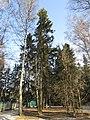 Trees in the outer wood. February 2014. - Деревья на опушке леса. Февраль 2014. - panoramio.jpg