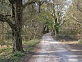 Two Droves, Puddletown Forest - geograph.org.uk - 396469.jpg