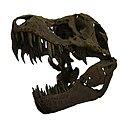 Tyranosaure-IMG 4176.jpg