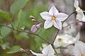 US-CA-Sacramento-GardenFlower-2012-04-18T13-17-58.jpg