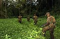 US Navy 030416-M-4588D-011 Marines assigned to 3rd Battalion 3rd Marine Regiment, Marine Corps Base Hawaii, conduct jungle training exercises on the island of Oahu.jpg