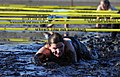 US Navy 110226-N-4936C-027 Intelligence Specialist 1st Class Debbie Koch crawls through the mud of Guantanamo Bay at low tide during the 1st annual.jpg
