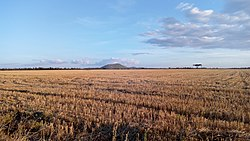 Wheat Plantation in Uasi Ngishu County near Moiben. Sergoit Hill in the background