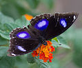 Unidentified butterfly 07.jpg