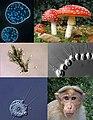 Unikonta collage.jpg