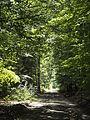 Unterlüß Waldweg an L280.JPG