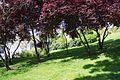 VIEW , ®'s - DiDi - RM - Ð 6K - ┼ , MADRID ARGANZUELA JARDÍN MURO - panoramio (9).jpg